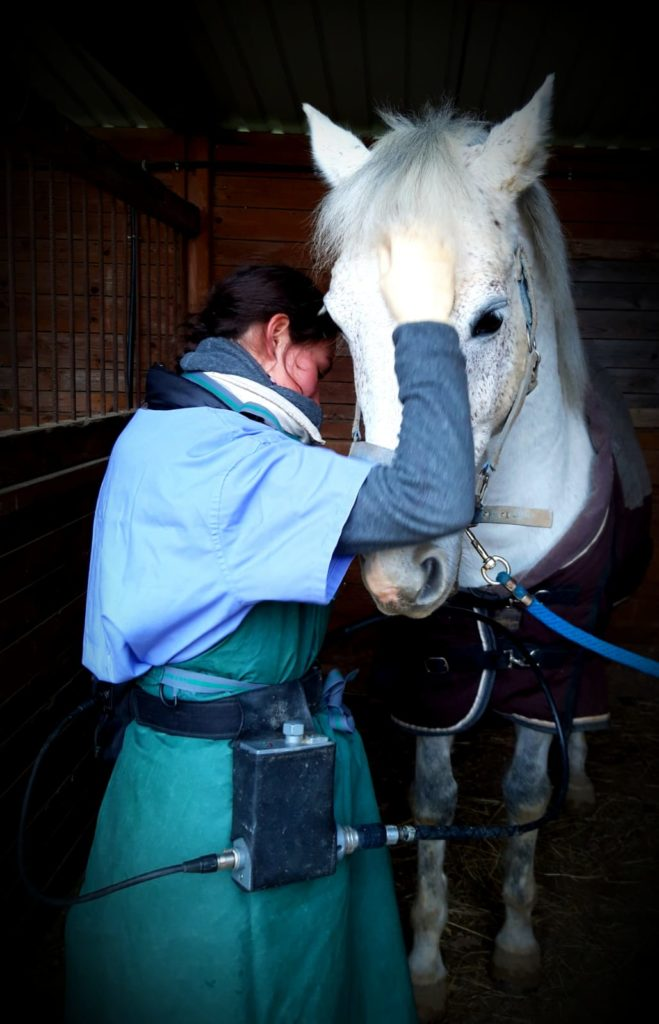 Photo kiliane-dentisterie -equine.com